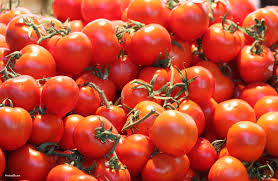 Top Quality Fresh Red Farm Harvested Tomatoes