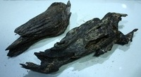 Agarwood, Aloeswood, Eaglewood, Gaharu, Agalocha Or Oudh