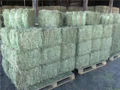 Best Quality Alfalfa Hay,Timothy, Rhodes grass Hay Ready