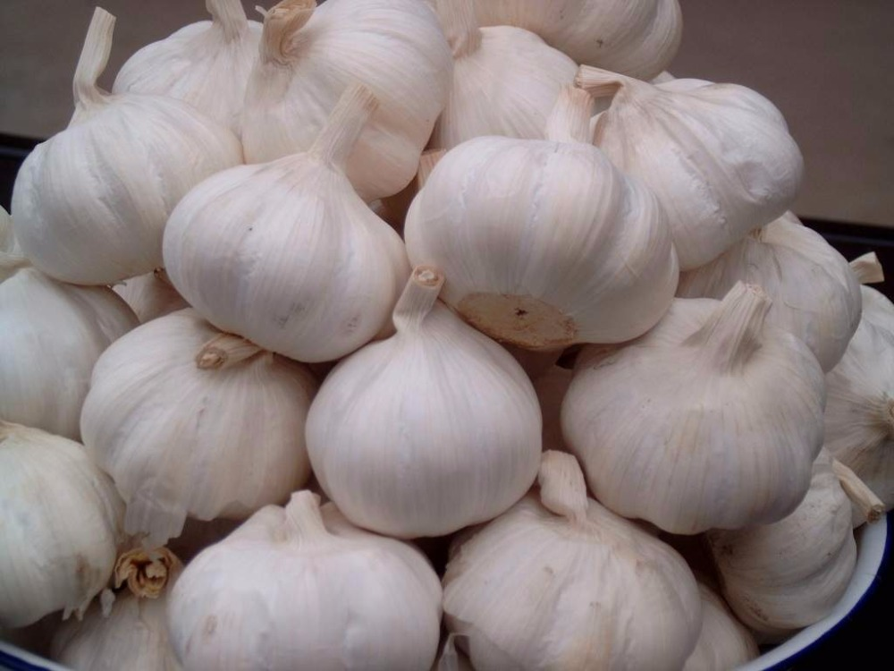 Fresh Garlic Normal White Garlic Natural Garlic