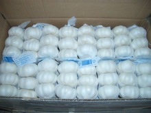 Good Quality Pure White Garlic For Export