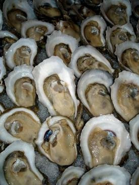 Frozen Oyster Frozen Seafood