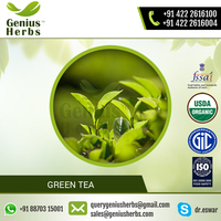 Methodically Obtained Green Tea from Reliable Exporter of the Market