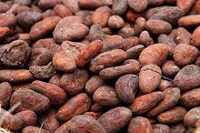 Fermented and Dried Cocoa Beans