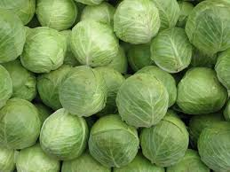 Indonesia high Cabbage vegetable