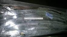 seafood frozen fresh new ribbon fish price(A grade) for sale