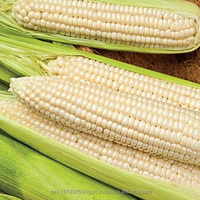 White Corn for sale, Sweet Yellow Corn for sale