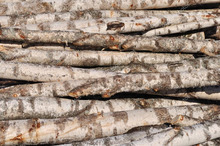 Stocks Available Larch, Spruce, Beech , Pine, Aspen, Birch Wood Logs
