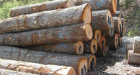WALNUT WOOD LOGS
