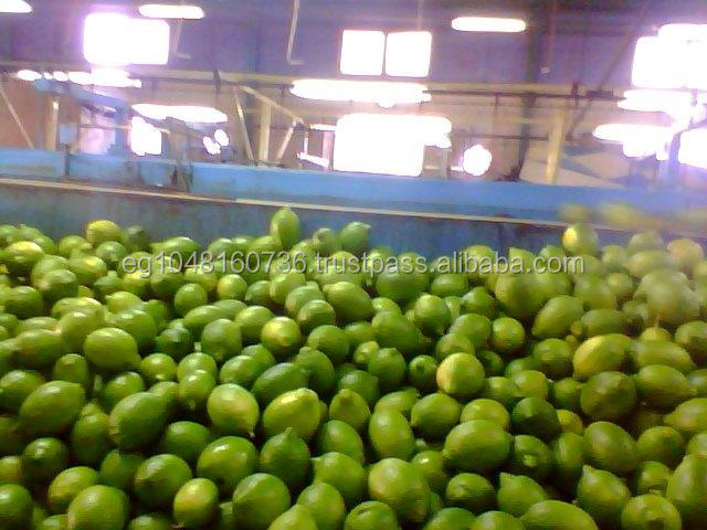 Lemon Type and Common Cultivation Type wholesale price fruit Egyptian lemon for export