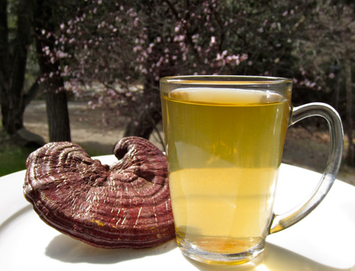 Good Quality Ganoderma tea For Sales