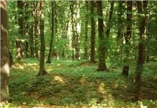 Forest for sale - Romania - IASI County
