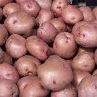 Best Quality Lady Rosetta Potato For