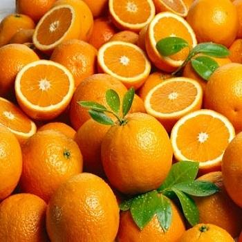 Fresh Citrus Fruits, Juicy Oranges and Valencia Oranges High Quality
