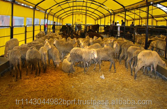Animal horse sheep goat cattle livestock shelter Cattle Net