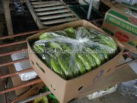 Fresh green Cavendish Banana, Unripe Banana for sale 2016!!