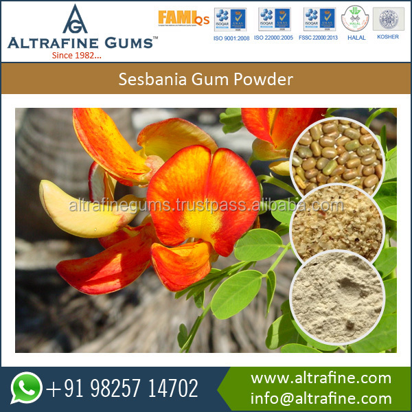 100% Natural Water Soluble Sesbania Gum Powder Available from Reputed Exporter