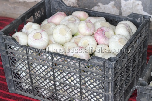 Best Price White Natural Fresh Garlic