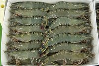 Shrimp/Seafood/ prawn Black tiger HLSO,HOSO, CPDTO,PDTO