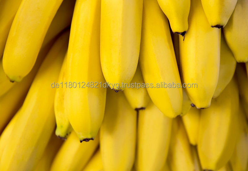 Fresh Cavendish Banana Premium Quality From Ecuador At Wholesale Prices