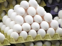 Organic Fresh Chicken Table Eggs & Fertilized Hatching Eggs, White and Brown eggs