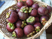 THAILAND FRESH MANGOSTEEN/MANGOSTEEN _ HIGH QUALITY, BEST PRICE