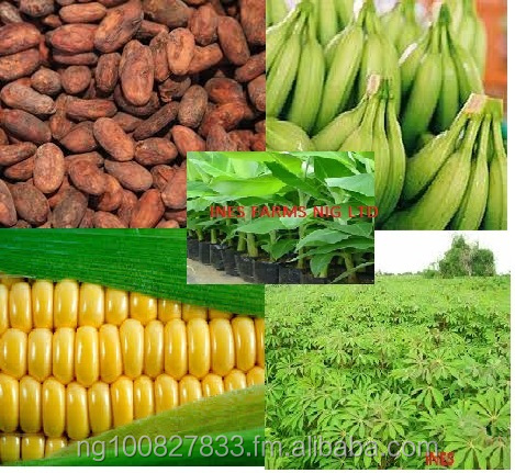 Farm produce such as Cocoa beans, Cassava (chips,pellets and flour etc),Plantain (hybrid suckers and quality fruits), maize/corn