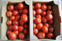 Fresh Beef Tomato, Fresh Plum Tomatoes For Sale.