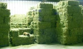 Alfalfa Hay Pellets For Cattles,Horses,Pigs and Other Small