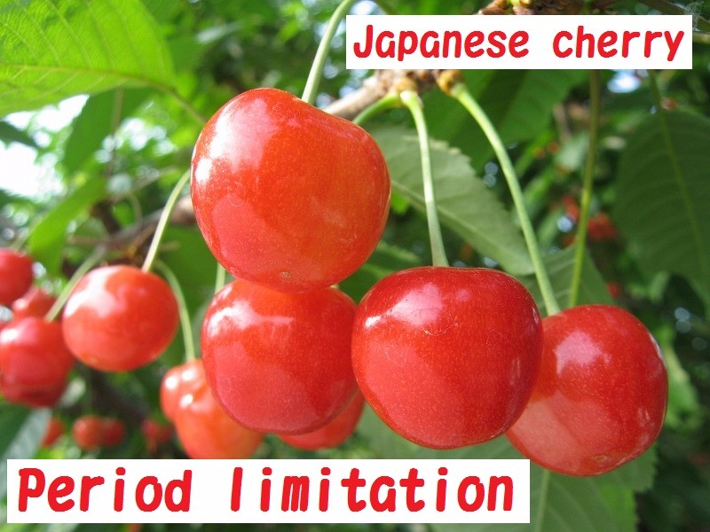 High-grade and Best-selling acerola cherry extract Japanese cherry at reasonable prices , small lot order available