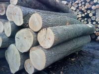 German White Ash And Oak Logs Available with discount on prices