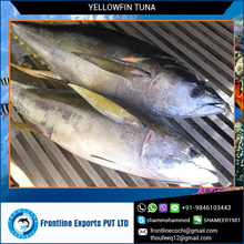 Sashimi Grade A Fresh Yellow Fin Tuna