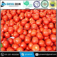Fresh Tomato For Sale Fresh Tomato And Fresh Green Tomato