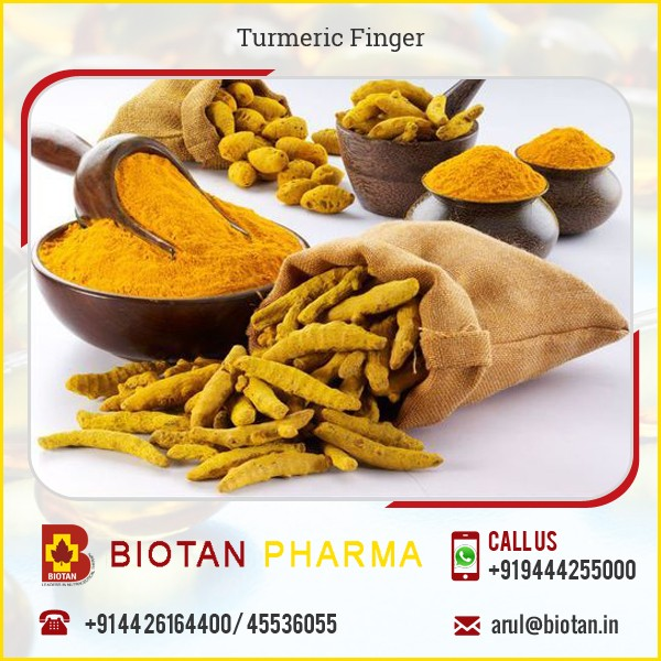 Very High Grade Turmeric Finger from Indian Supplier