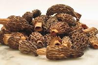 Dried organic morchella conica/esculenta mushroom