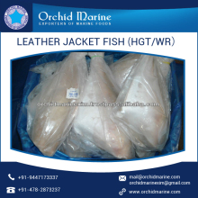 Popular Choice Cleaned Leather Jacket Fish for Different Cuisines