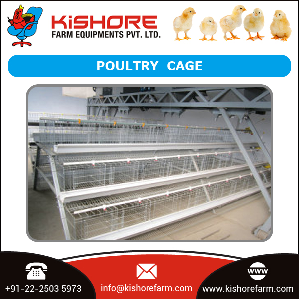 Huge Sale of Best Type of Poultry Cage for Economic Egg Production