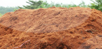 Loose Cocopeat (Qiu Qiu : 2598494113)