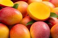 Excellent Condirion of Fresh Mangoes