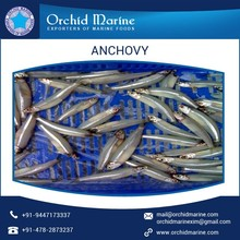 Completely Clean Anchovy from ISO Certified Company