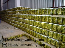 SUPPLY FRESH CUCUMBER WITH BEST PRICE AND HIGH QUALITY