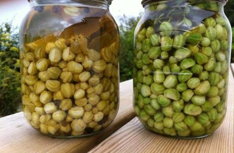 Natural Caper For At your Door Step