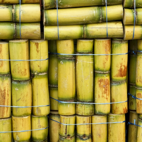 HIGH QUALITY FRESH SUGAR CANE FOR MAKING JUICE $201