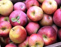 Fresh Apples Fuji, Gala, Red, Golden Delicious