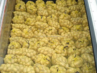 Fresh Organic Holland potatoes for sale