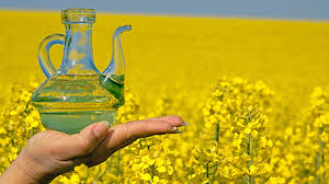 Discount price for Refined/Crude Canola/Rapeseed Oil with
