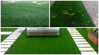 Turf Grass for Garden Landscaping.
