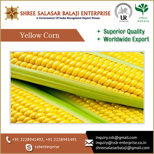 ISO Certified Non Gmo Yellow Corn for Animal Feed