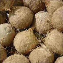 Fresh Coconuts Suppliers in Kerala