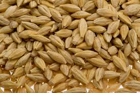reliable supplier of Australian barley malt for beer specification 2-row barley malt